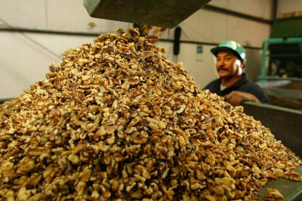 Walnuts Are Moved By Conveyors Through The Poindexter Nut Company. Isidro Gutierrez, Right, Keeps An Eye On Clean Nuts Piling Up In A Bin. (Photo By RICHARD DARBY/Fresno Bee)